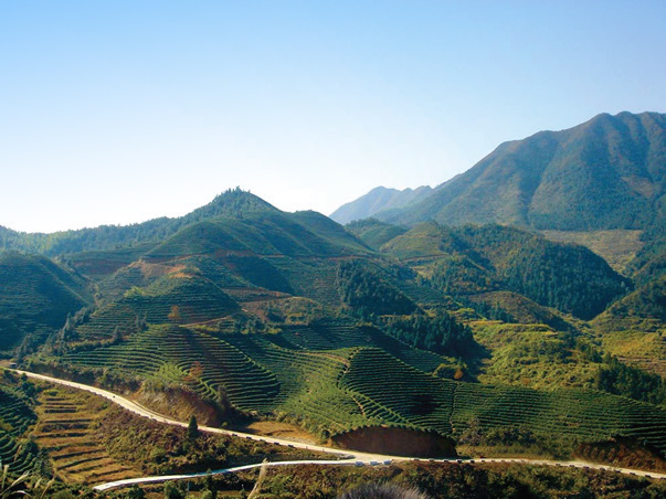 The Zhejiang Tea Region, Home of Firsd Tea Parent Company Zhejiang Tea Group